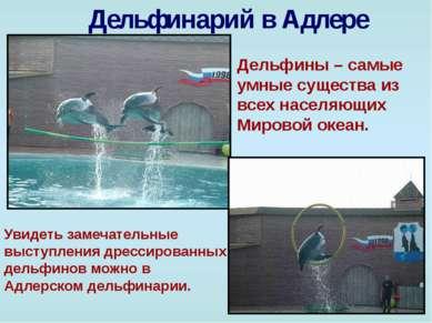 Дельфинарий в Адлере Дельфины – самые умные существа из всех населяющих Миров...