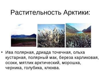 Растительность Арктики: Ива полярная, дриада точечная, ольха кустарная, поляр...