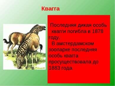Квагга, обитавшая на юге Африки, была удивительным парнокопытным. Спереди она...