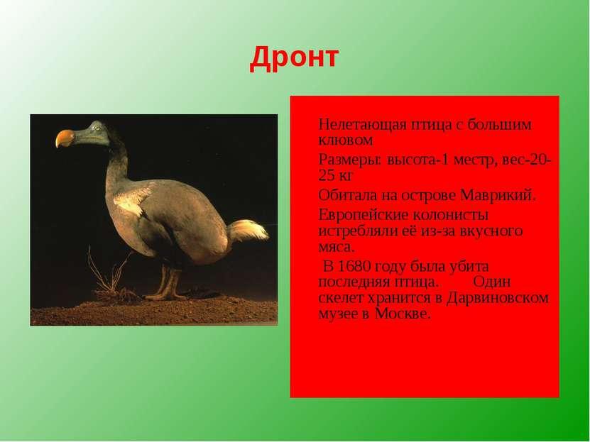 Дронт Нелетающая птица с большим клювом Размеры: высота-1 местр, вес-20-25 кг...