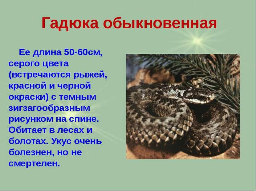 Гадюка обыкновенная Ее длина 50-60см, серого цвета (встречаются рыжей, красно...
