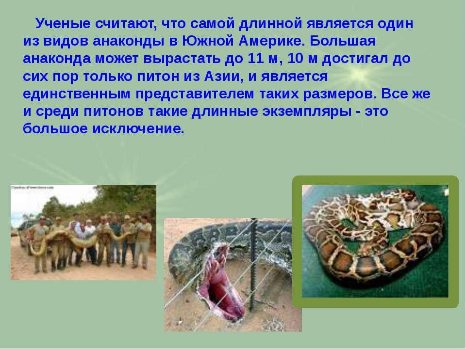Учeные считают, что самой длинной является один из видов анаконды в Южной Аме...