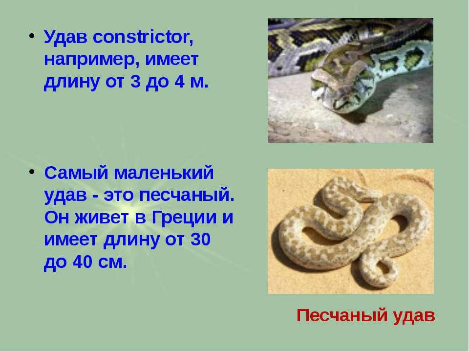 Удав constrictor, например, имеет длину от 3 до 4 м. Самый маленький удав - э...