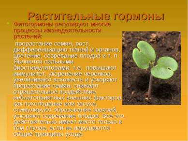 Растительные гормоны Фитогормоны регулируют многие процессы жизнедеятельности...