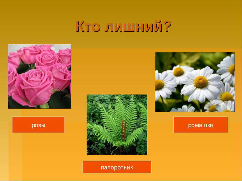 Кто лишний? розы ромашки папоротник