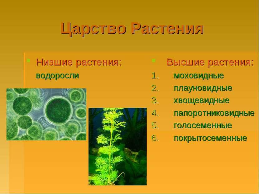 Царство Растения Низшие растения: водоросли Высшие растения: моховидные плаун...