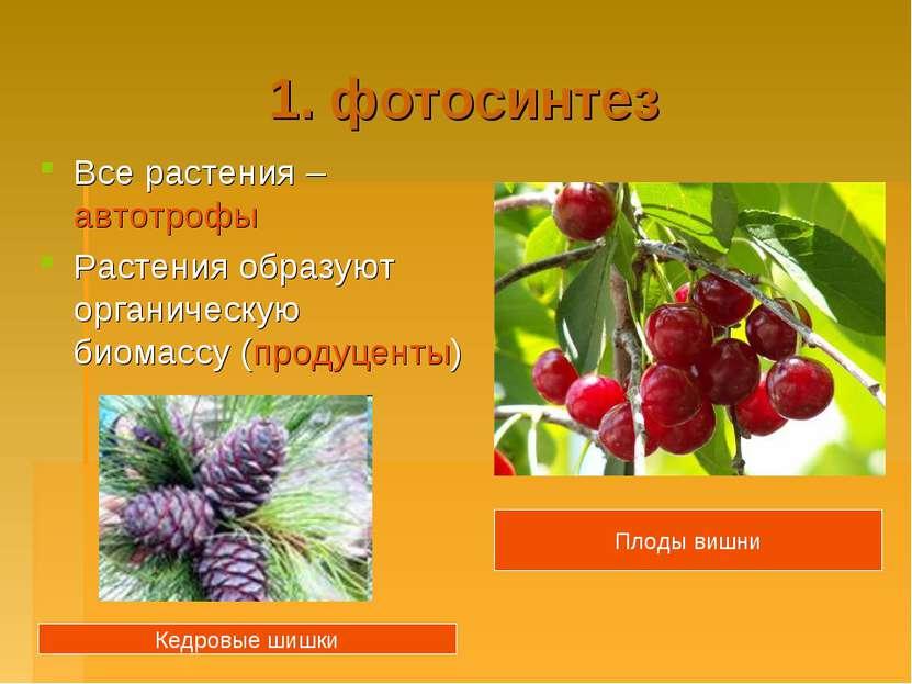 1. фотосинтез Все растения – автотрофы Растения образуют органическую биомасс...