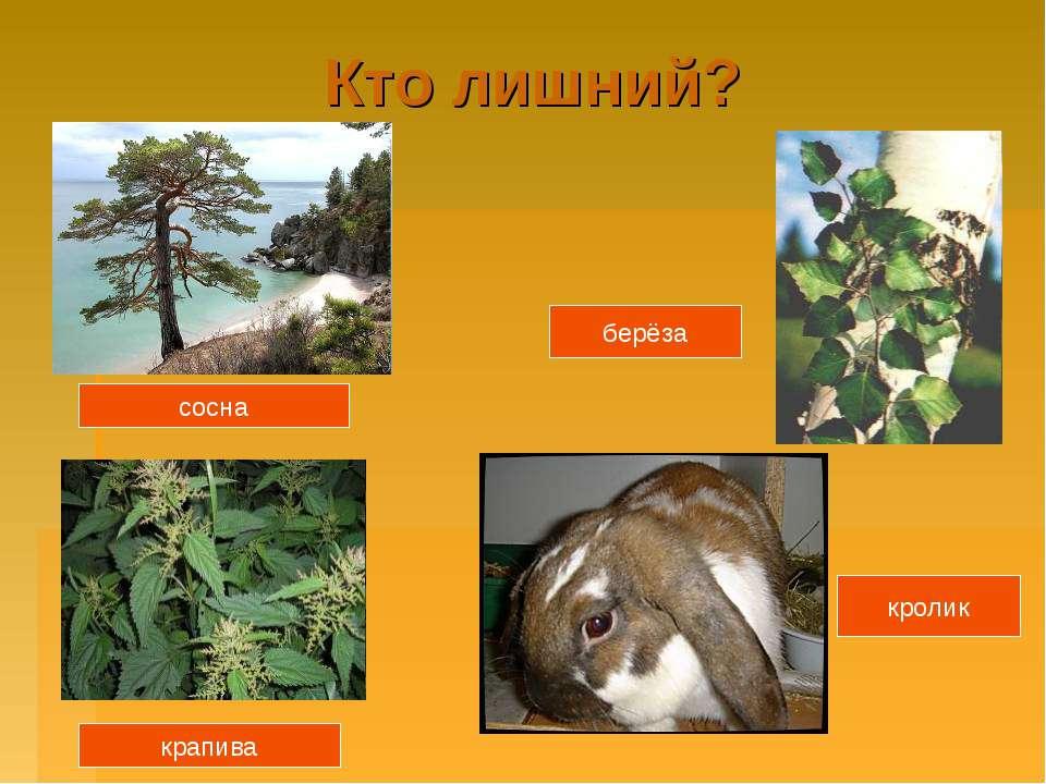 Кто лишний? сосна крапива берёза кролик