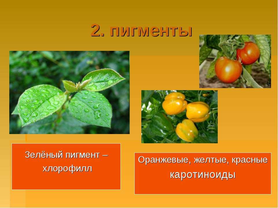 2. пигменты Зелёный пигмент – хлорофилл Оранжевые, желтые, красные каротиноиды