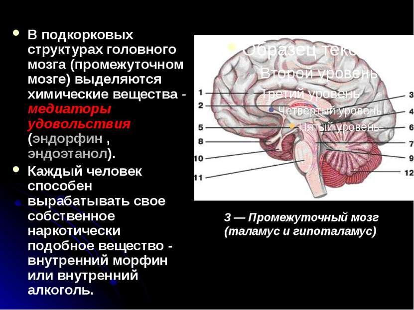 В подкорковых структурах головного мозга (промежуточном мозге) выделяются хим...