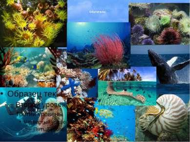 Атлантический океан— второй по величине океан Земли после Тихого океана, рас...
