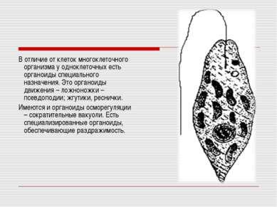 В отличие от клеток многоклеточного организма у одноклеточных есть органоиды ...