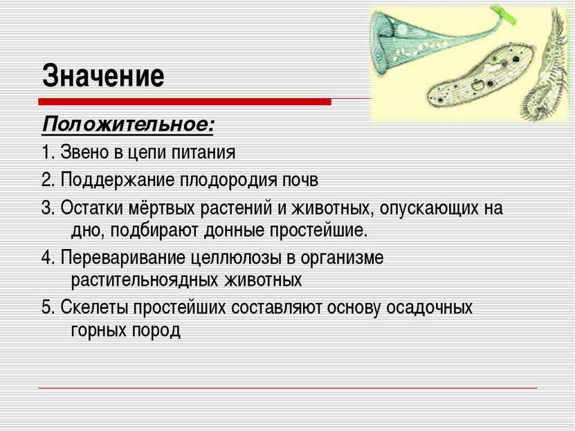 Значение Положительное: 1. Звено в цепи питания 2. Поддержание плодородия поч...
