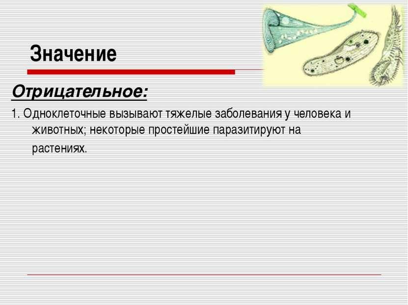 Значение Отрицательное: 1. Одноклеточные вызывают тяжелые заболевания у челов...