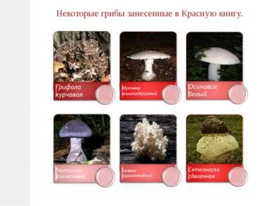 Некоторые грибы занесенные в Красную книгу.