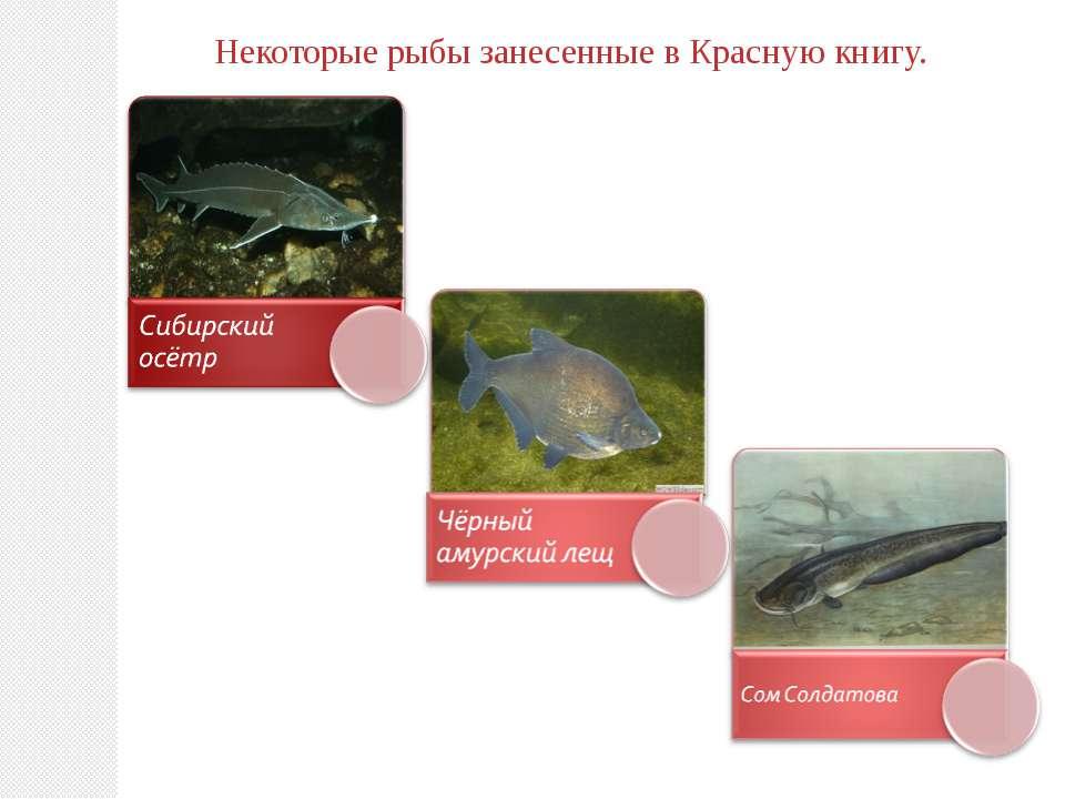 Некоторые рыбы занесенные в Красную книгу.