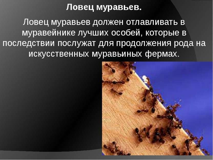 Ловец муравьев. Ловец муравьев должен отлавливать в муравейнике лучших особей...