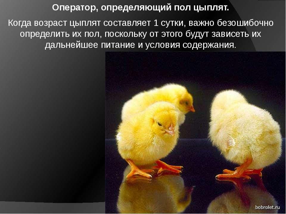 Оператор, определяющий пол цыплят. Когда возраст цыплят составляет 1 сутки, в...