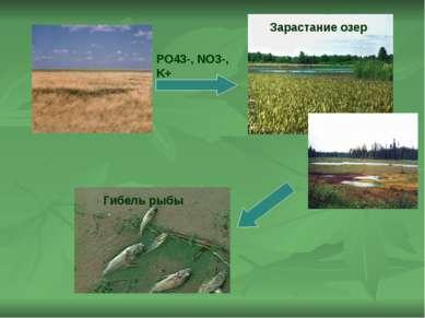 PO43-, NO3-, K+ Зарастание озер Гибель рыбы