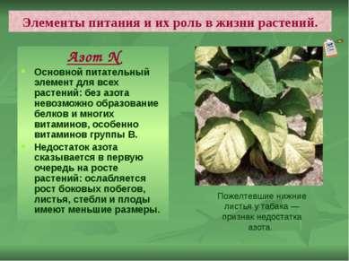 Элементы питания и их роль в жизни растений. Азот N Основной питательный элем...