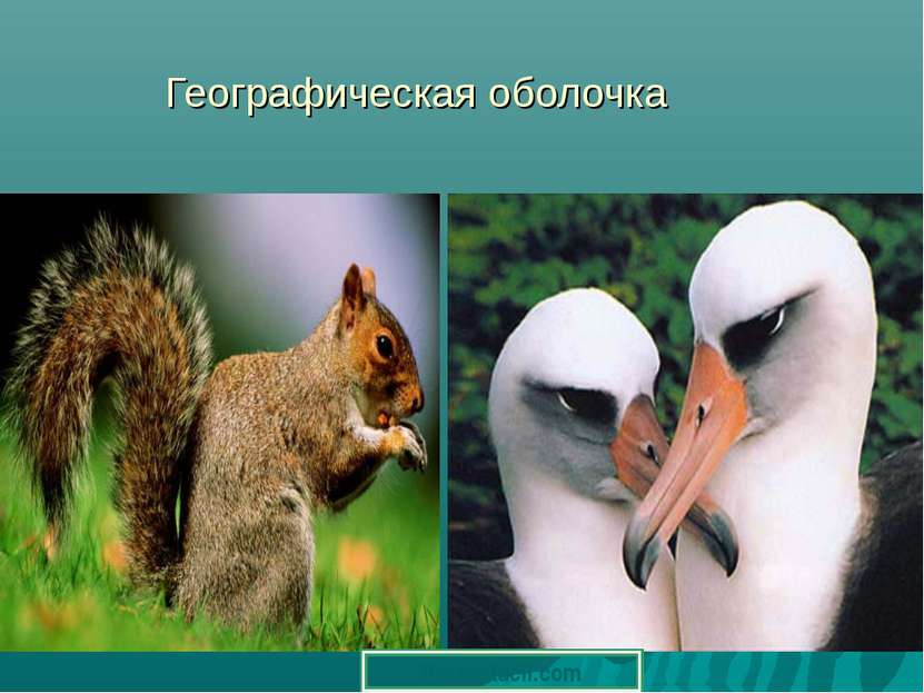Географическая оболочка Prezentacii.com
