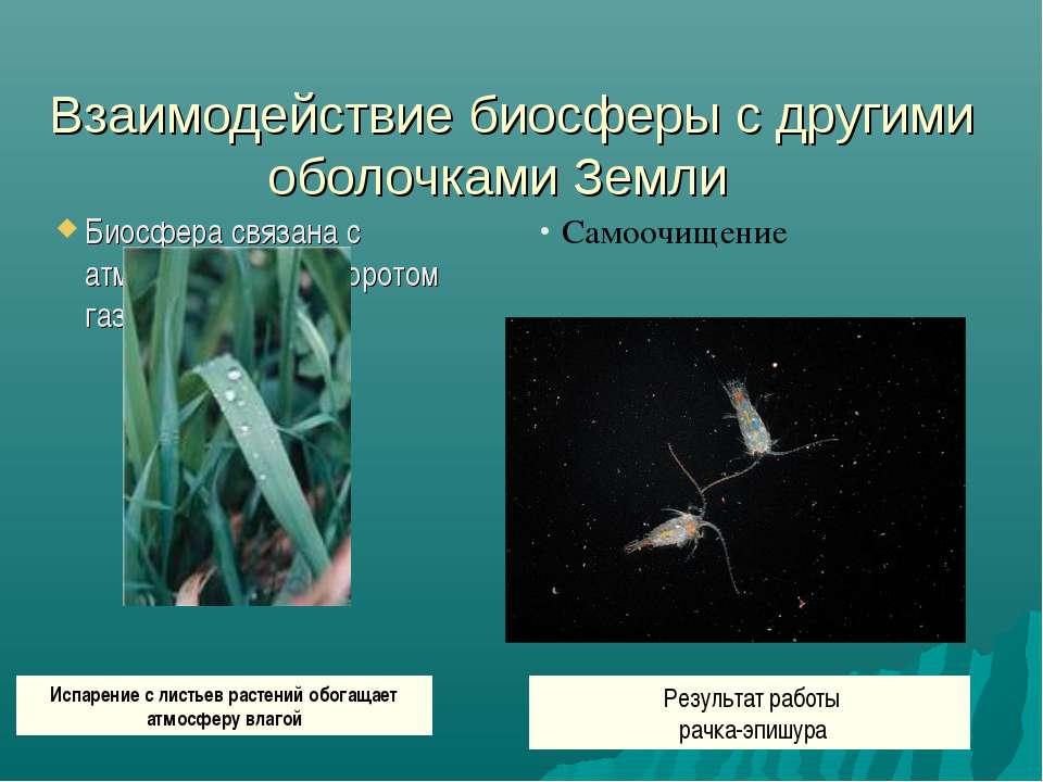 Взаимодействие биосферы с другими оболочками Земли Биосфера связана с атмосф...