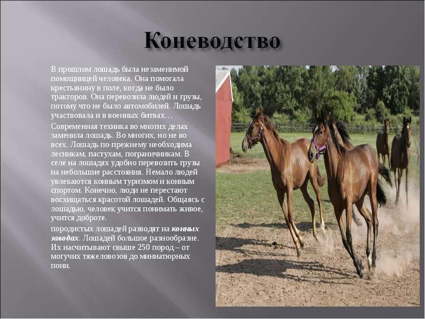 В прошлом лошадь была незаменимой помощницей человека. Она помогала крестьяни...