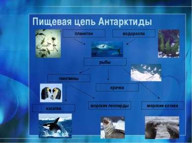Пищевая цепь Антарктиды планктон рыбы водоросли пингвины морские леопарды мор...