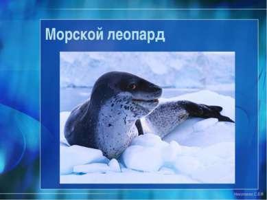 Морской леопард Николаева С.Б.®