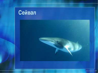 Сейвал Николаева С.Б.®
