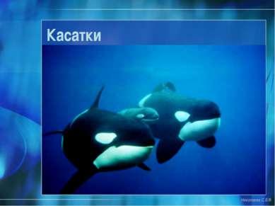 Касатки Николаева С.Б.®