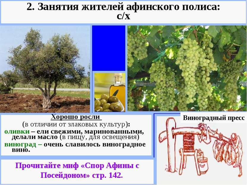 Виноградный пресс Хорошо росли (в отличии от злаковых культур): оливки – ели ...