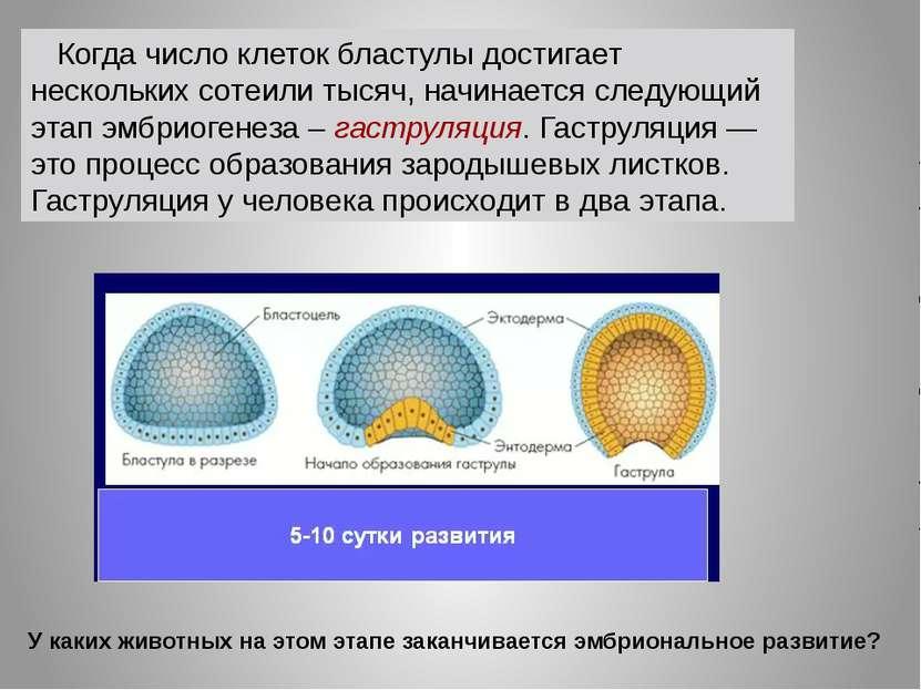 Когда число клеток бластулы достигает нескольких сотеили тысяч, начинается сл...