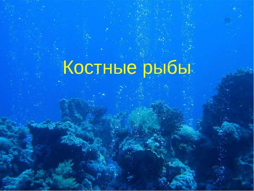 Костные рыбы