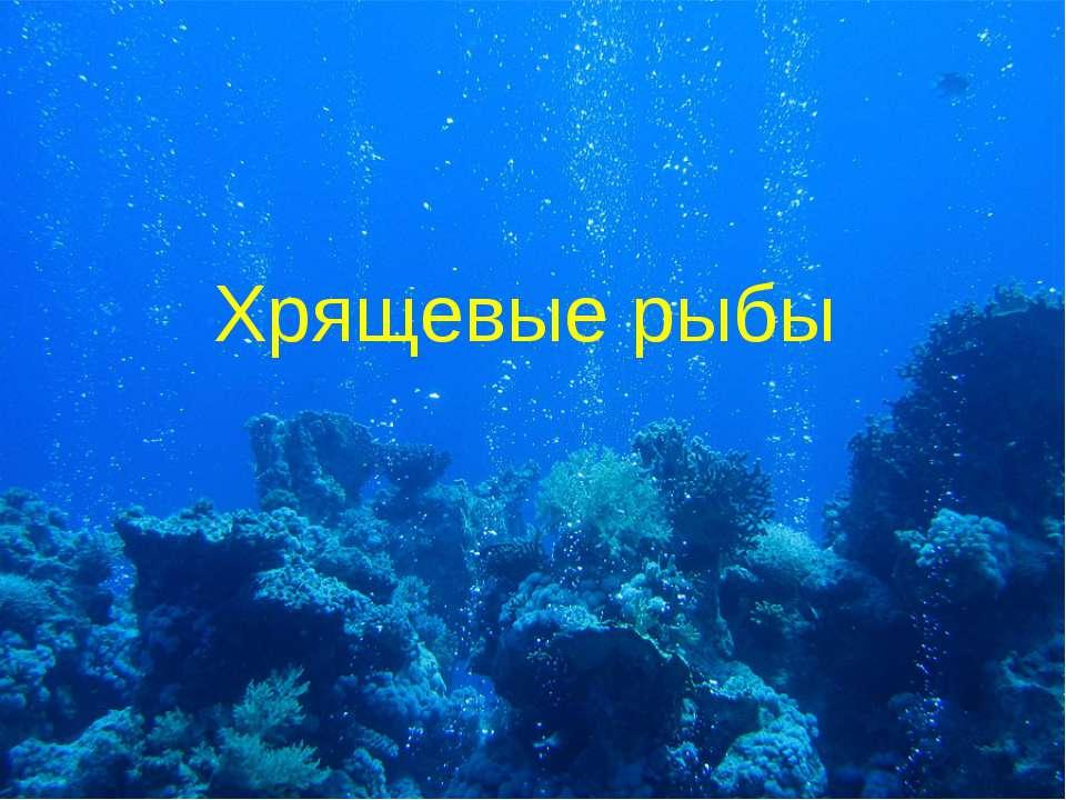 Хрящевые рыбы