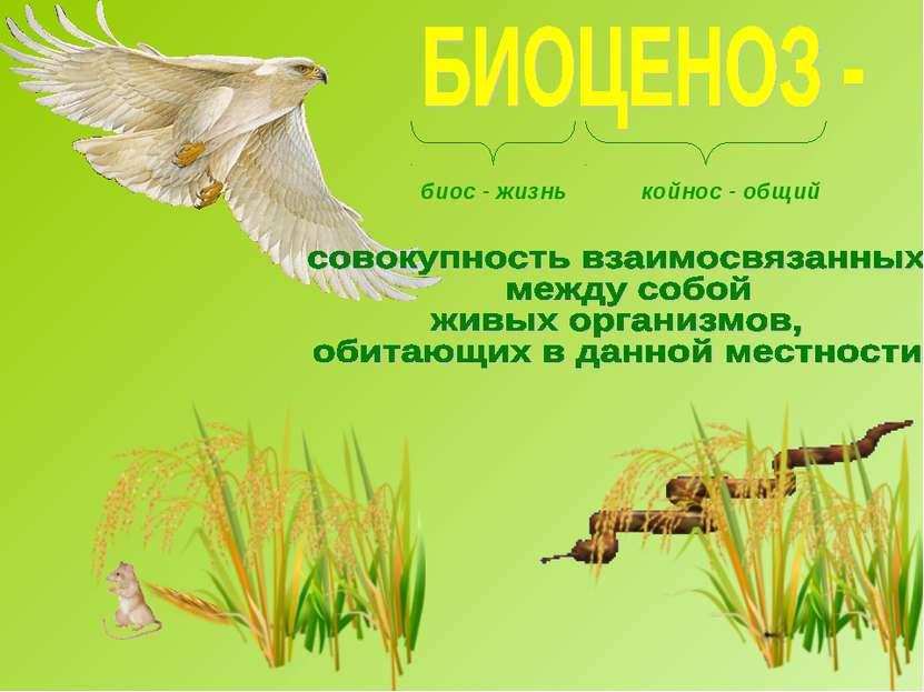 биос - жизнь койнос - общий