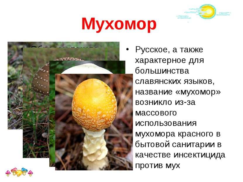 Мухомор Русское, а также характерное для большинства славянских языков, назва...