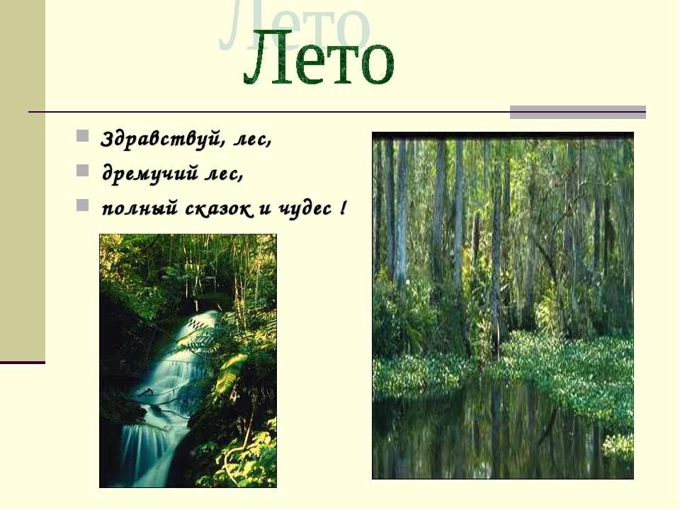 Здравствуй, лес, дремучий лес, полный сказок и чудес !