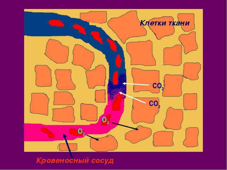 Клетки ткани Кровеносный сосуд О2 О2 СО2 СО2