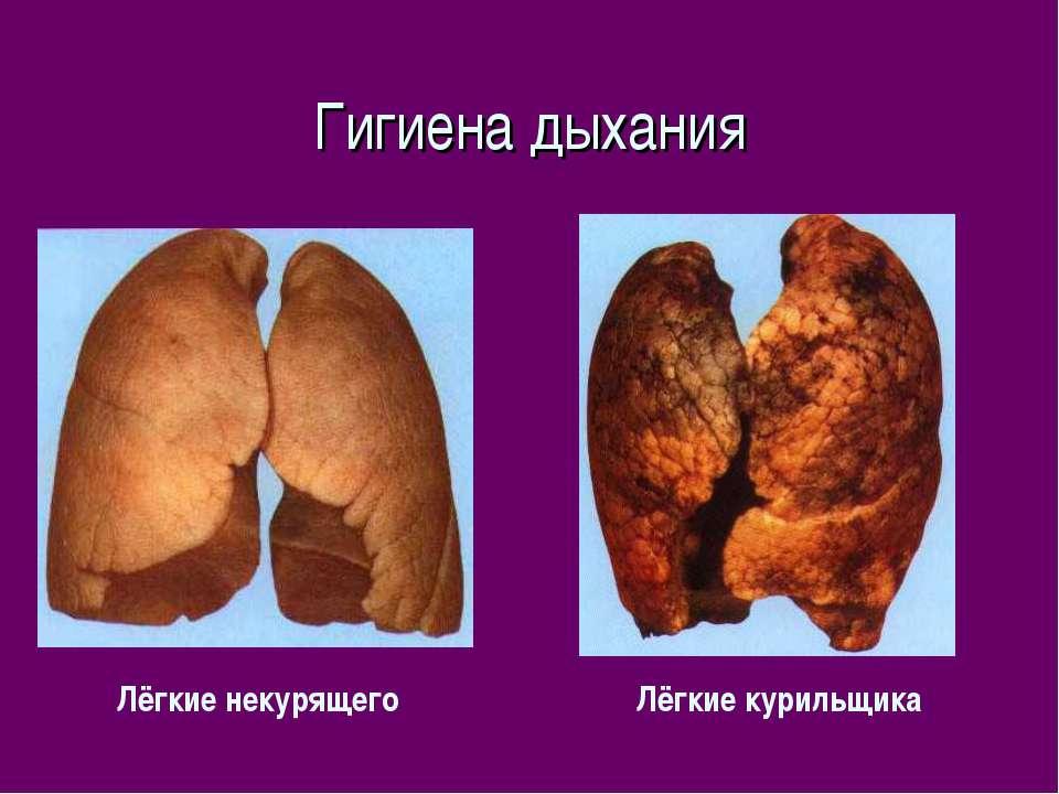 Гигиена дыхания Лёгкие некурящего Лёгкие курильщика