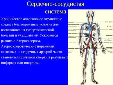 Сердечно-сосудистая система Хроническое алкогольное отравление создаёт благоп...