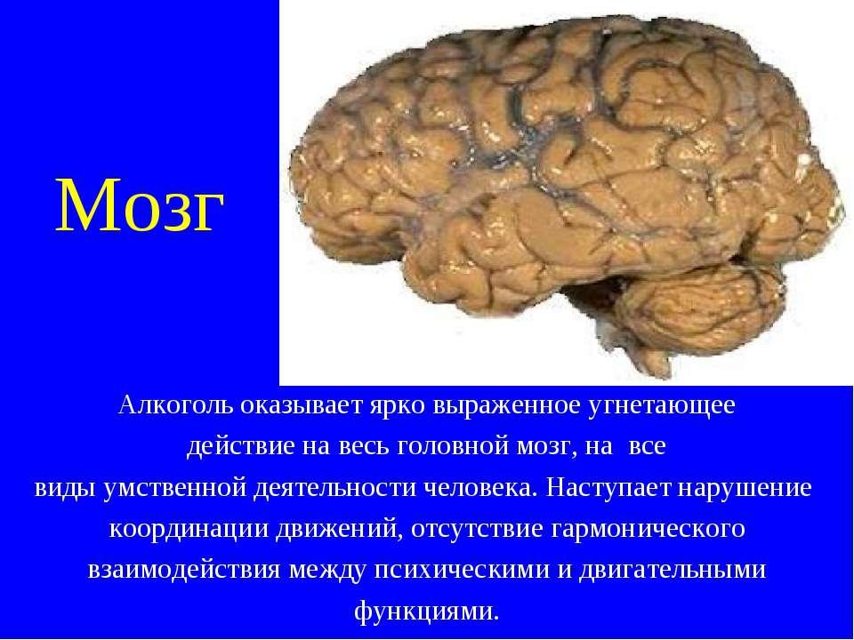 Мозг Алкоголь оказывает ярко выраженное угнетающее действие на весь головной ...