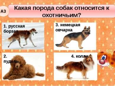 Какая порода собак относится к охотничьим? А3 2. пудель 3. немецкая овчарка 4...