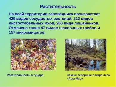 Растительность На всей территории заповедника произрастает 429 видов сосудист...