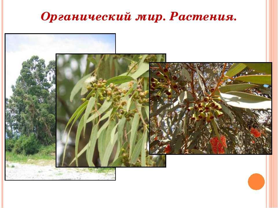 Органический мир. Растения.
