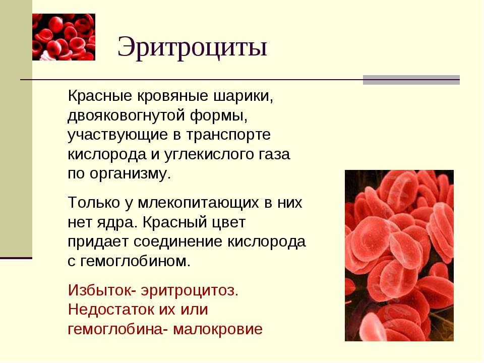 Эритроциты Красные кровяные шарики, двояковогнутой формы, участвующие в транс...