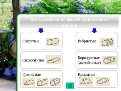 Проведение веществ по стеблю Внутреннее строение стебля