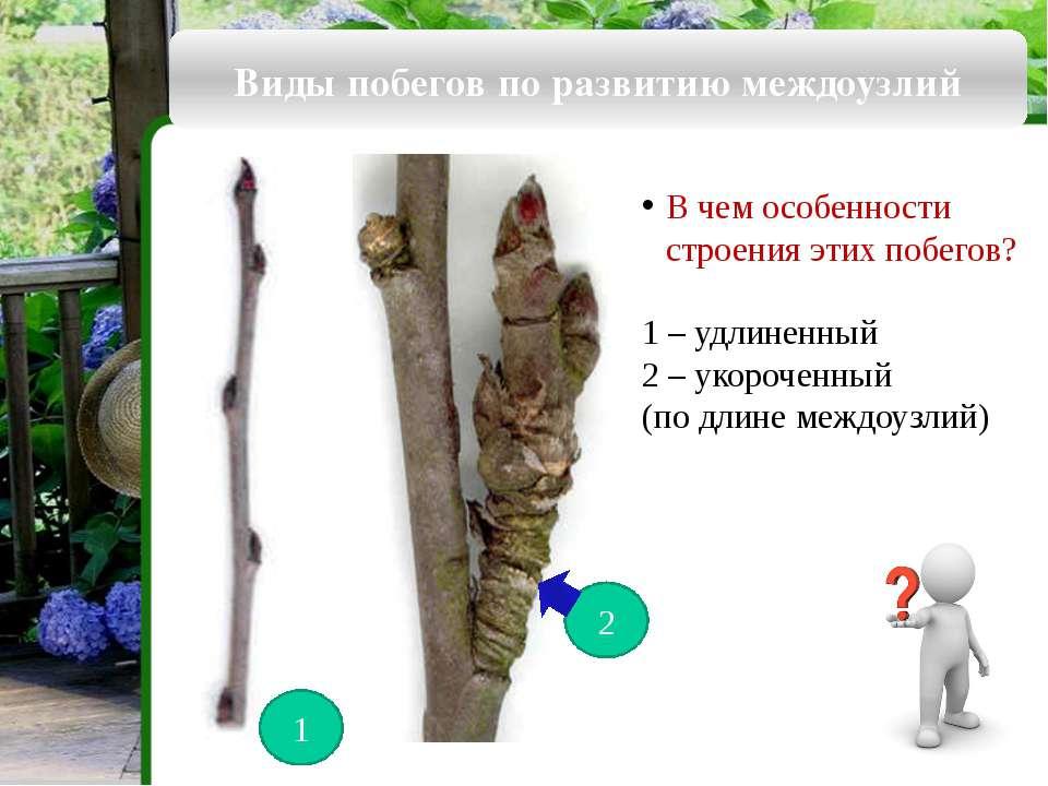 Виды стеблей по форме поперечного сечения Округлые Ребристые Сплюснутые Грани...