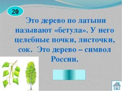 Секвойя Назовите самое высокое дерево в мире. 50