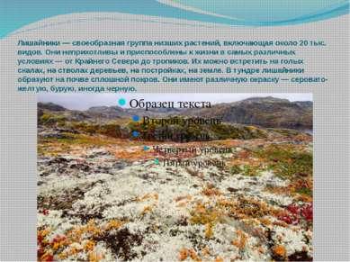 Лишайники— своеобразная группа низших растений, включающая около 20 тыс. вид...